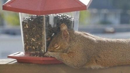 Trova uno scoiattolo sul davanzale della finestra che dorme: ecco cosa è accaduto