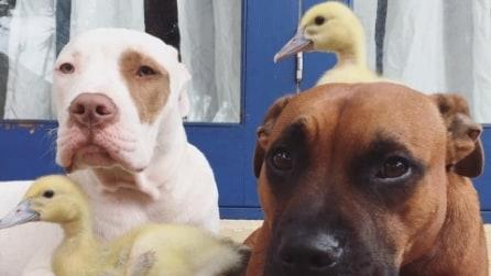 Adotta vari animali in difficoltà e diventano tutti migliori amici