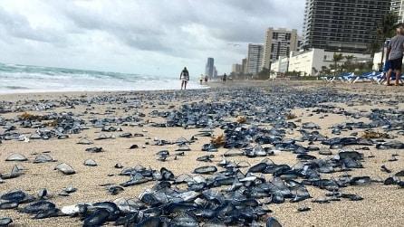 """""""Sono migliaia e sono pericolose"""". Ecco cosa trovano su una spiaggia della Florida"""