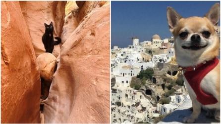 Foto in giro per il mondo: animali domestici diventano star su Instagram