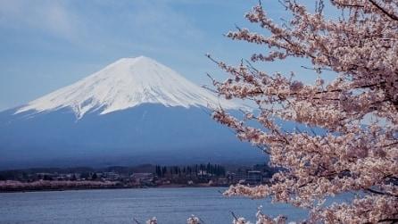 I Sakura a Tokyo: le spettacolari immagini della fioritura dei ciliegi
