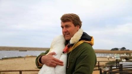 Il Cigno abbraccia il suo salvatore: le immagini emozionanti