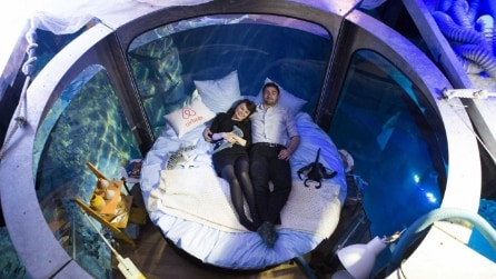 Su Airbnb la prima camera da letto nella vasca degli squali