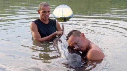 Sente un lamento provenire dalla riva, il surfista salva il cucciolo di balena