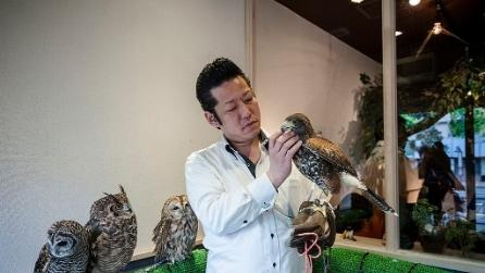 Gufi, conigli e serpenti: gli animal-café più stravaganti