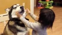 I cani odiano gli abbracci. Basta guardare le foto