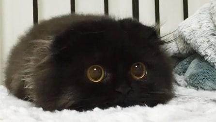 Questo gattino ha qualcosa di speciale: una volta incrociato il suo sguardo capirete perché