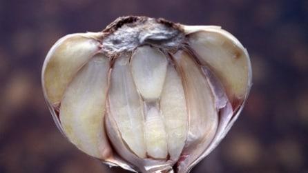 Oroscopo: ad ogni segno zodiacale una pianta curativa