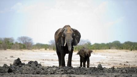 Non c'è più acqua e lo Zimbabwe vende i suoi animali selvatici