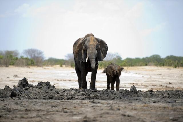 Lo Zimbabwe sta vivendo un duro periodo di siccità