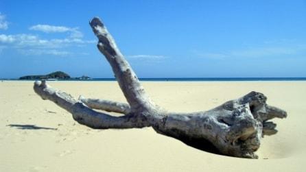 Trova un tronco sulla spiaggia, il modo in cui lo trasforma è geniale