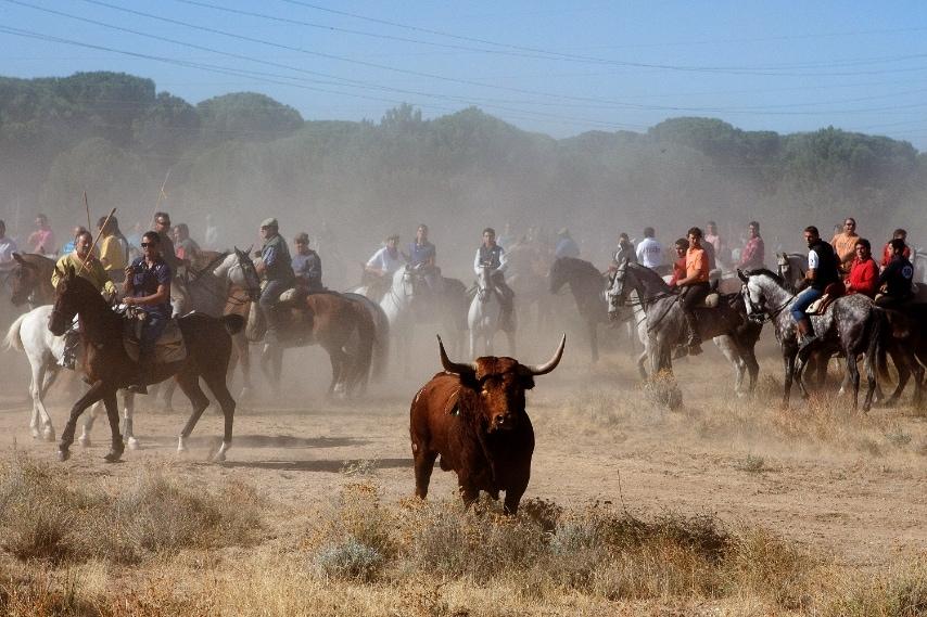 Il governo di Castilla e León, in Spagna, si schiera dalla parte dei tori