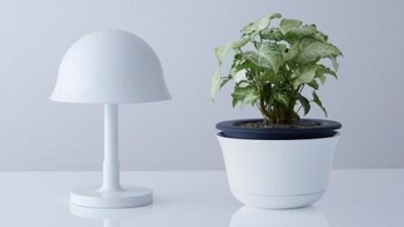 Ecco il vaso e la lampada che vi proteggono dai terremoti