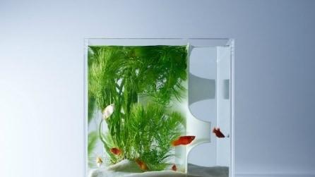 Sembrano normali acquari ma nascondono un segreto che vi stupirà