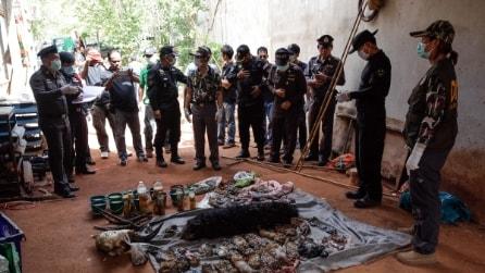 Orrore nel Tempio delle Tigri, trovati 40 cuccioli morti