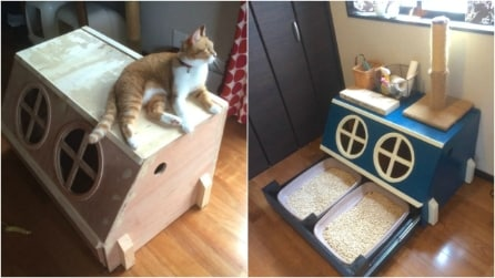 Come costruire una lettiera per gatti: l'idea geniale a prova di bambino