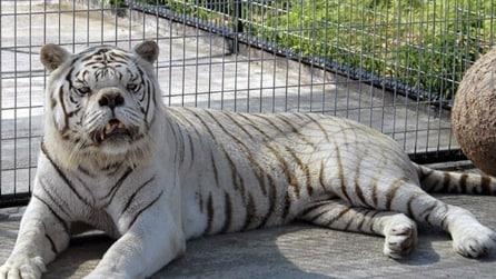 Avete mai notato degli animali con la sindrome di Down? Ecco perché è raro trovarne in giro