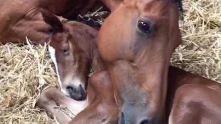 Partorisce un puledrino, ma il piccolo muore: la forza di questa mamma vi commuoverà