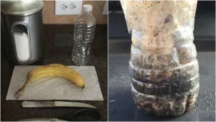 Come costruire una trappola per mosche fai da te con una bottiglia di plastica