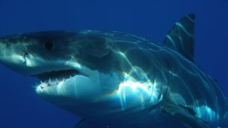 Squali pericolosi: ecco 7 specie che vivono nel Mediterraneo