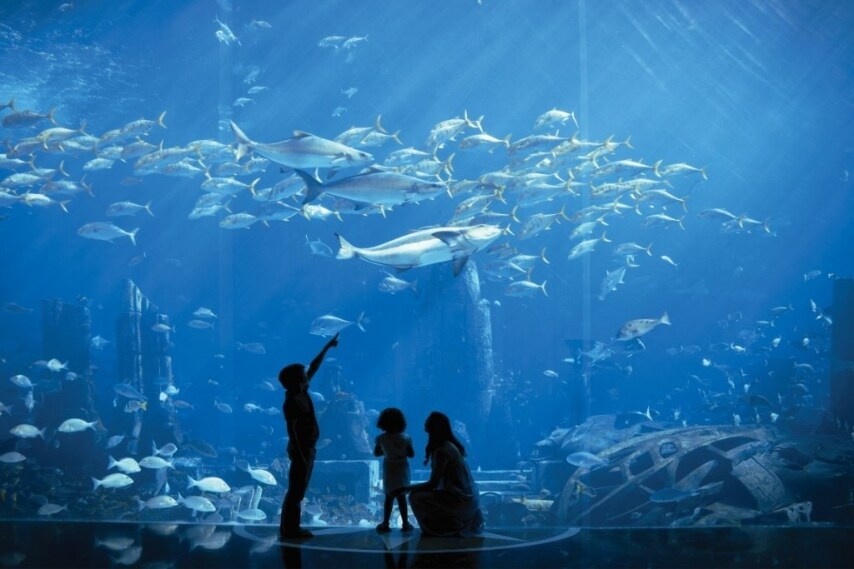 A Dubai invece la catene di alberghi Atlantis ha costruito un albergo che occupa un'intero isolotto dell'arcipelago artificiale di The Palm; qui c'è una vera foresta avventurosa piena di giostre, scivoli d'acqua e piramidi da esplorare.