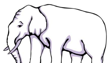 Quante zampe ha quest'elefante? L'illusione ottica che vi confonderà