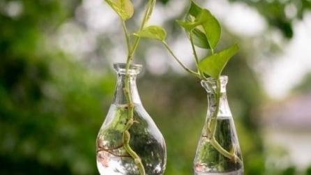Questa pianta non dovrebbe mai mancare in casa: il motivo vi stupirà