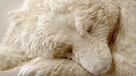A prima vista vi sembrerà un orso: non crederete ai vostri occhi