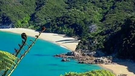 Nuova Zelanda, la spiaggia di Awaroa Beach acquistata dai cittadini riapre ai turisti