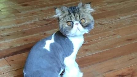 Pubblica le foto del suo gatto su Imgur e il web si scatena: impossibile non ridere