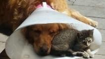 L'amicizia che supera tutto: il cane ha un incidente e il gatto gli fa compagnia