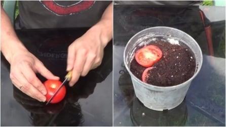 Taglia un pomodoro e lo mette nel vaso: ciò che ottiene vi stupirà