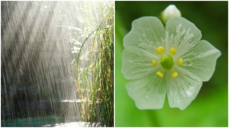 Sembra una comune pianta, ma a contatto con l'acqua crea qualcosa di meraviglioso