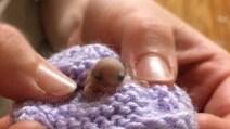 È uno tra gli animali più piccoli al mondo: le immagini sono sorprendenti