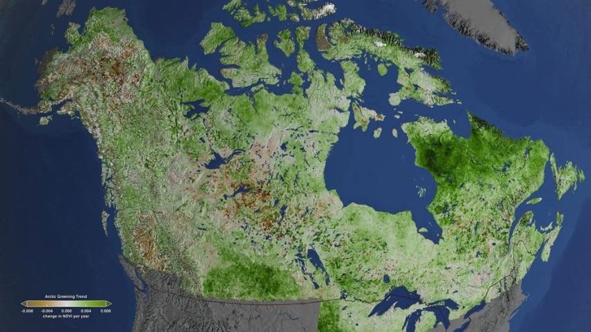 A causa del caldo anomalo cambia anche la distribuzione della vegetazione: alle alte latitudini si è riscontrato un incremento visibile grazie alle immagini satellitari.