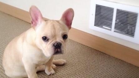 Sembra un cane come tutti gli altri, in realtà è molto speciale: la sua storia vi sorprenderà