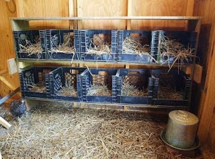 Un posto comodo per le galline dove deporre le uova
