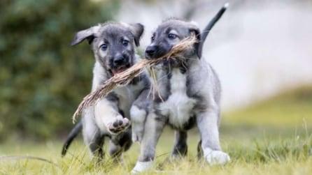 Dà alla luce due cani identici: in Sudafrica nascono i primi cuccioli monozigoti