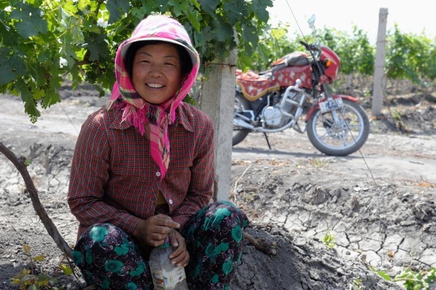 Pechino ha chiamato questa regione Xinjiang (nuova frontiera), e ha deciso nel 1980 di piantare migliaia di vitigni occidentali (cabernet sauvignon, syrah, merlot, chardonnay, chenin blanc, riesling…) insieme ad altre varietà locali (beichun, cibayi, shabulawe…): nell'est della Cina i terreni sono carissimi e inquinati dall'urbanizzazione, e non sono adatti alla coltivazione di viti.