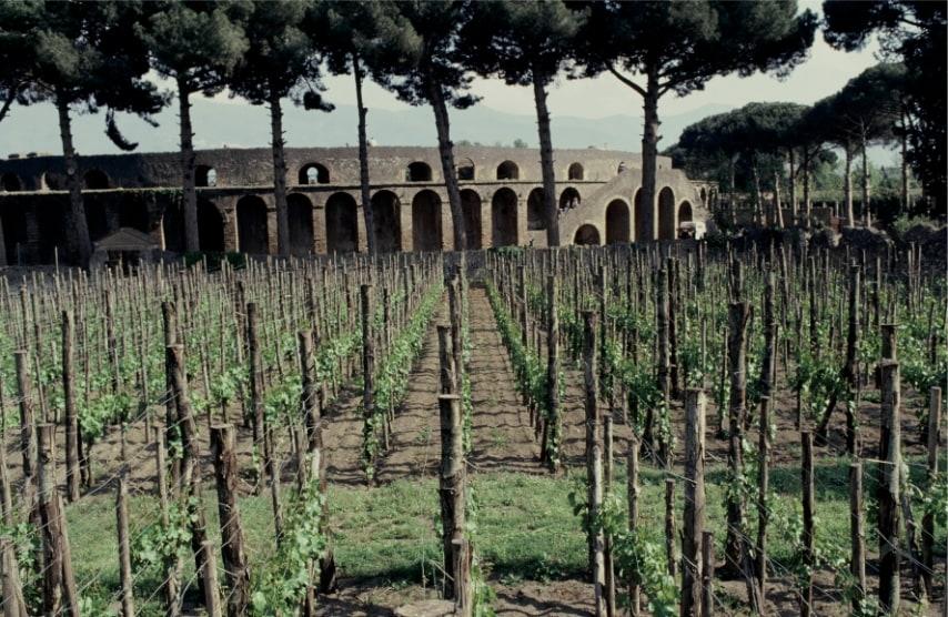 Il 24 agosto del 79 d. C. il Vesuvio eruttò e la vita della ricca città di Pompei si fermò di colpo, comprese le sue vigne il cui vino era molto gradito alla corte imperiale. Impiantata dai Greci, la tradizione viticola era già molto antica e gli affreschi ritrovati durante gli scavi ci fanno capire quanto spazio veniva dato alle vigne sui versanti del Vesuvio.