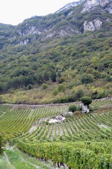 In Francia i vigneti delle zone più alte si trovano nel sud-est del paese. Le vigne d'Irouléguy (Pirenei atlantici) però, crescono fino a 450 m di altitudine. Per le forti pendenze del suolo, le vigne sono coltivate su terrazze che la montagna protegge dai venti. Le vigne più alte della Francia crescono in Savoia, a 500 m di altezza, nei microclimi d'Ayze e della Combe de Savoie.