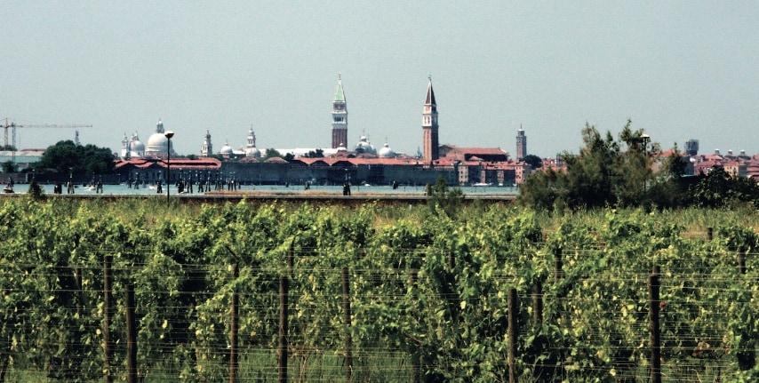 L'isola di Sant'Erasmo appartiene al Comune di Venezia, ma non somiglia per niente alla città visitata da 20 milioni di turisti ogni anno. Venezia è un'eccellente idea di marketing, il vino però deve essere buono, e alla vite il sale non piace proprio.