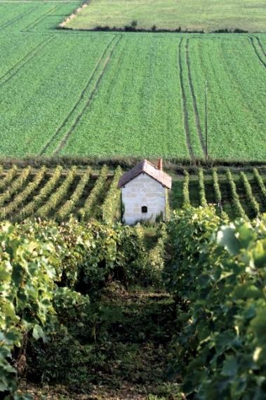 """Per l'uva ci vuole la giusta quantità di acqua. Il freddo costituisce una minaccia per la vigna. Per andare oltre i limiti naturali, però, i viticoltori hanno ideato nel tempo parecchie soluzioni. Alcuni viticoltori, come quelli del Quebec, """"vestono"""" le piante con """"cappotti"""" isolanti."""