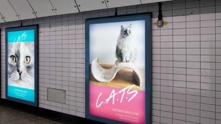 Addio pubblicità: solo gatti nella metropolitana di Londra