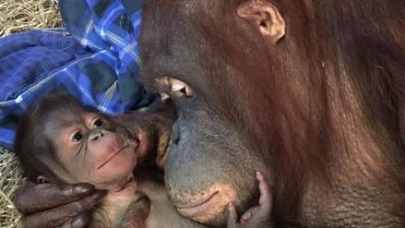 Washington, fiocco azzurro allo zoo: gli scatti emozionano il web