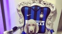 Coco, il cane di Mauro e Wanda Icardi