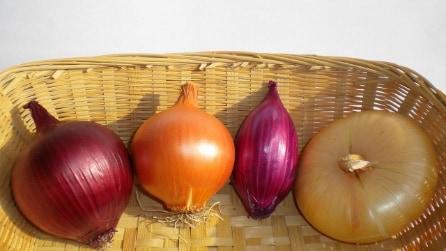 Buccia della cipolla: gli usi insoliti e ingegnosi che non tutti conoscono
