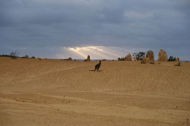 https://commons.wikimedia.org/wiki/File:Pinnacles_Desert,_Nambung_National_Park,_Western_Australia_26.jpg