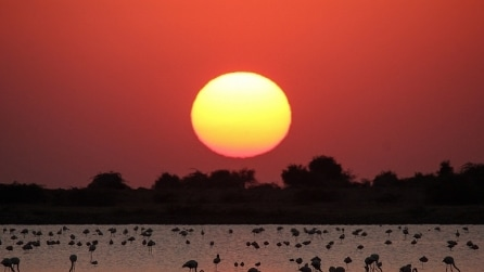 Rann di Kutch, la bellezza della natura in India