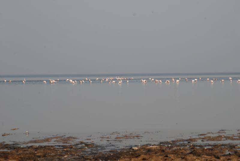https://commons.wikimedia.org/wiki/File:Little_Rann_of_Kutch_birds12.jpg